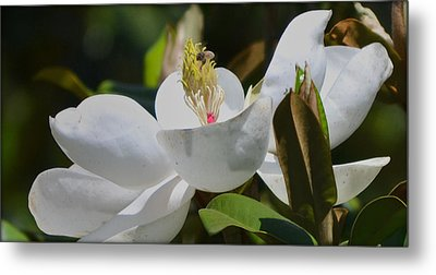 Metal Print featuring the photograph Flower And The Bee by Rima Biswas
