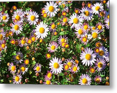 Metal Print featuring the photograph Flower Assault by Jim Moore
