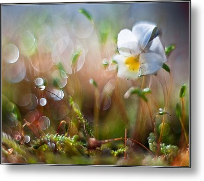 Flower Bell Metal Print by Adrian Krol