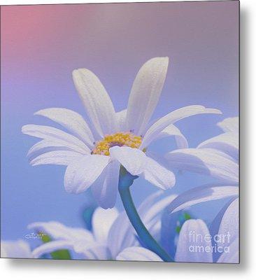 Flower For You Metal Print by Jutta Maria Pusl
