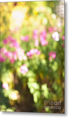 Flower Garden In Sunshine Metal Print by Elena Elisseeva