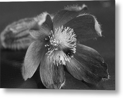 Flower In Black And White Metal Print by Mark J Seefeldt