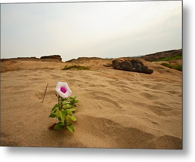 Flower In Desert Metal Print by Panya Jampatong