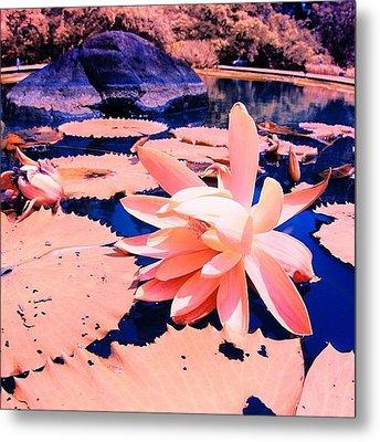 #flower #instahub #instagood #instamood Metal Print by Tommy Tjahjono