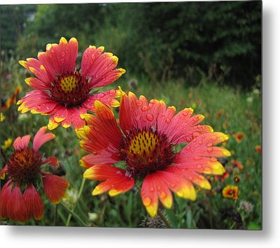 Metal Print featuring the photograph Flower by John Crothers