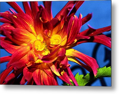 Metal Print featuring the photograph Flower by Kelly Reber
