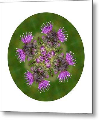Metal Print featuring the photograph Flower Of Scotland by Lynn Bolt