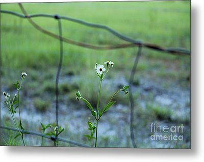 Flower Through The Fence Line Metal Print by Theresa Willingham