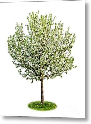 Flowering Apple Tree Metal Print by Elena Elisseeva