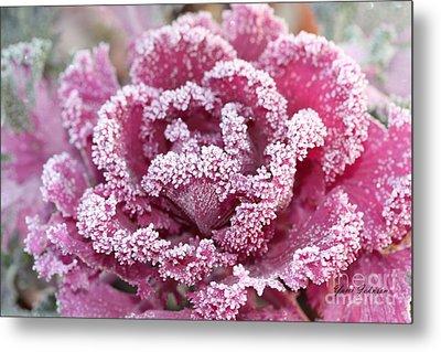 Flowering Cabbage Metal Print by Yumi Johnson