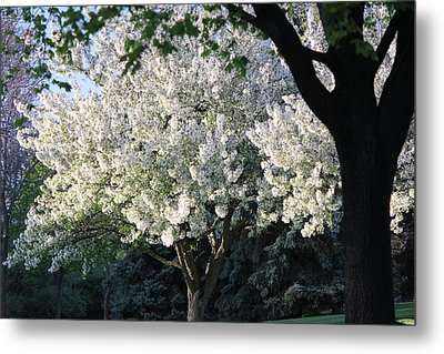 Flowering Springtime Tree Metal Print by James Hammen