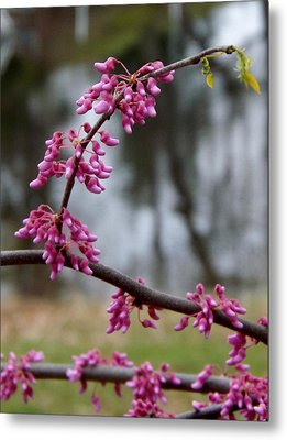 Metal Print featuring the photograph Flowering Tree 1 by Gerald Strine