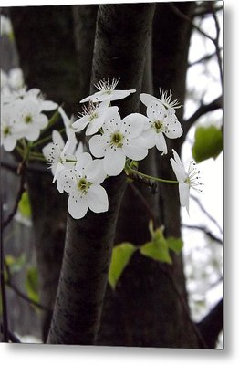 Metal Print featuring the photograph Flowering Tree 4 by Gerald Strine