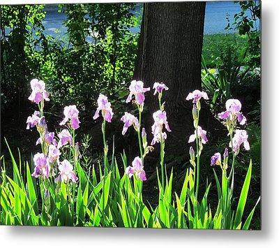 Flowers-32 Metal Print