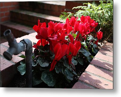 Flowers And Water Spout Metal Print by Luke Robertson