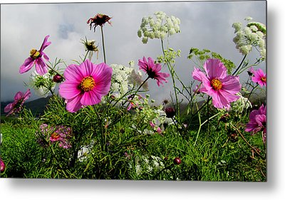 Metal Print featuring the photograph Flowers by Barbara Walsh