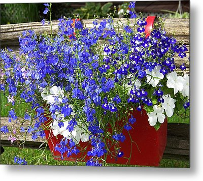 Metal Print featuring the photograph Flowers For Summer by Robin Regan