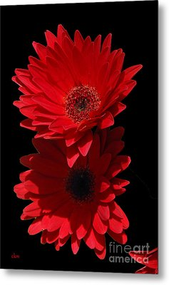 Metal Print featuring the photograph Flowers From My Son by Cindy Manero