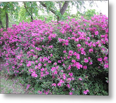 Metal Print featuring the photograph Flowers by Shawn Hughes