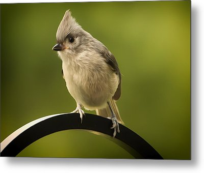 Flowing Tufted Titmouse Metal Print by Bill Tiepelman