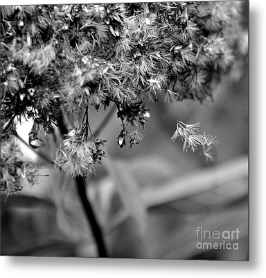 Fluffy Metal Print by Tanya  Searcy