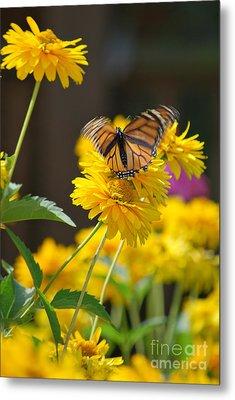 Fluttering Monarch Butterfly Metal Print by Lila Fisher-Wenzel