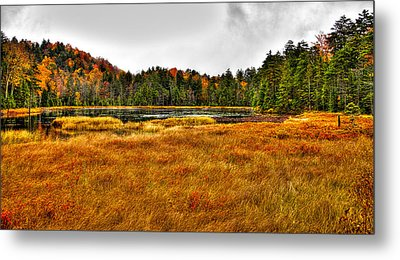 Fly Pond On Rondaxe Road Metal Print by David Patterson