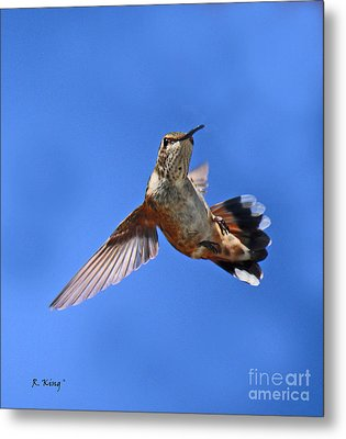 Flying Backwards - No Problem Metal Print