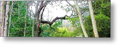 Metal Print featuring the photograph Flying Branch by Pamela Hyde Wilson