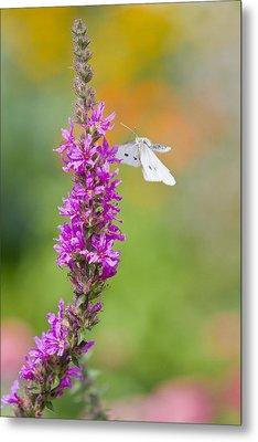 Flying Butterfly Metal Print by Melanie Viola