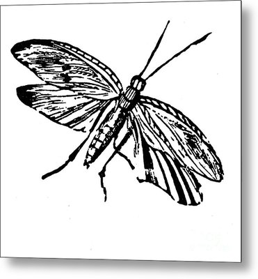 Flying Insect Metal Print by Granger