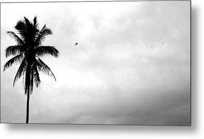 Flying-off From Palm Tree Metal Print by Rosvin Des Bouillons