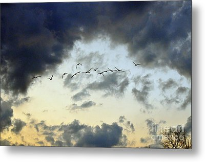 Flying South For The Winter Metal Print by Paul Ward