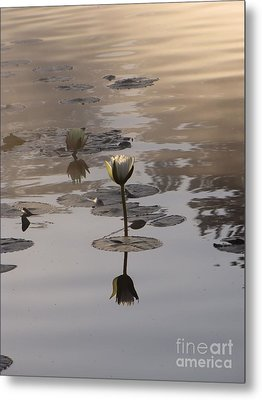Fog And Reflections Metal Print by Michelle H