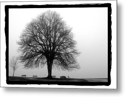Foggy Day H-5 Metal Print by Mauro Celotti