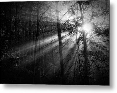 Foggy Forest Metal Print by Matt  Trimble