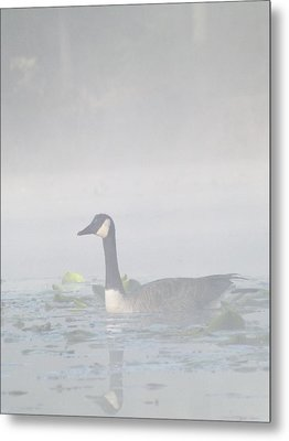 Metal Print featuring the photograph Foggy Morning Goose by Gerald Strine
