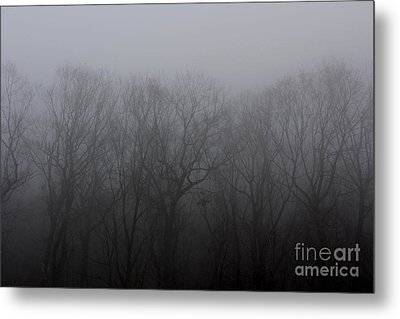 Foggy Treeline Metal Print by Lee Dos Santos
