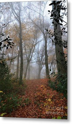 Fogy Forest In The Morning 3 Metal Print