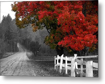 Foliage And Black And White Metal Print by Tammy Collins