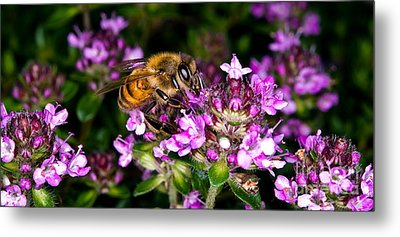 Follow The Bee Metal Print by Terry Elniski
