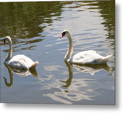 Metal Print featuring the photograph Follow The Leader by Paula Tohline Calhoun