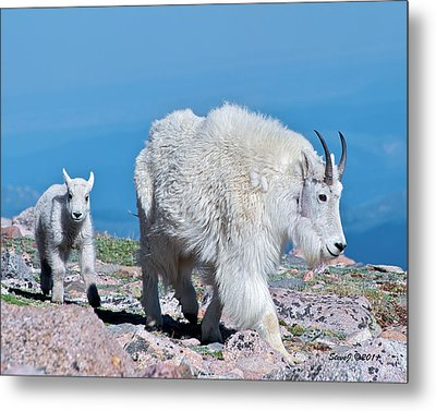Metal Print featuring the photograph Following Momma by Stephen  Johnson
