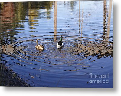 Following Theirs Path By Line Gagne Metal Print by Line Gagne