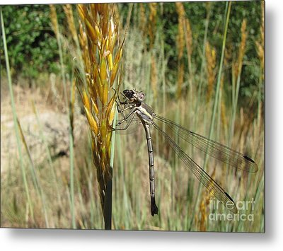 Food Chain Metal Print by Michelle H