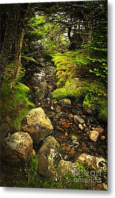 Forest Creek Metal Print by Elena Elisseeva