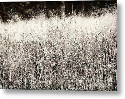 Forest Entry Metal Print by John Rizzuto