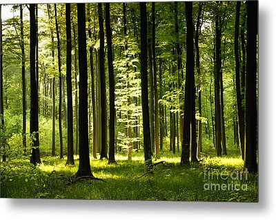 Forest Idyll Metal Print by Renate Knapp