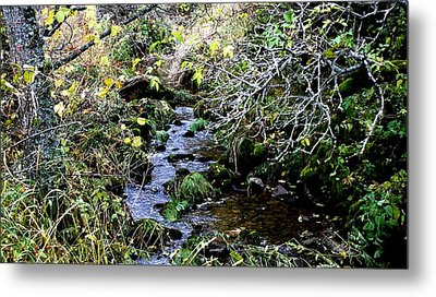 forest in Leon Metal Print by Luis and Paula Lopez
