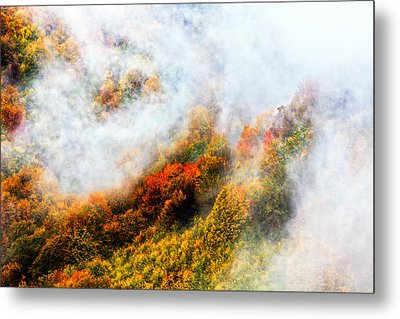 Forest In Veil Of Mists Metal Print by Evgeni Dinev